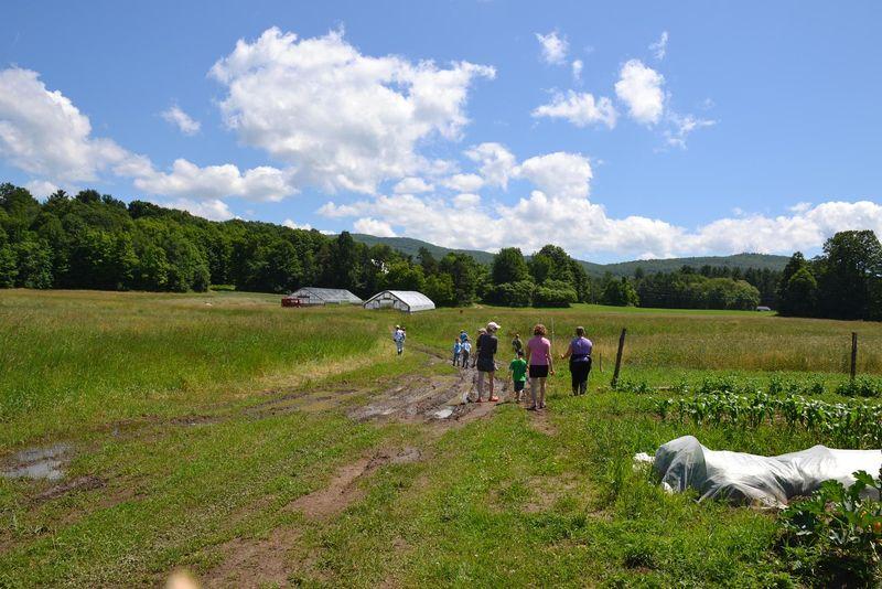 Organic fields