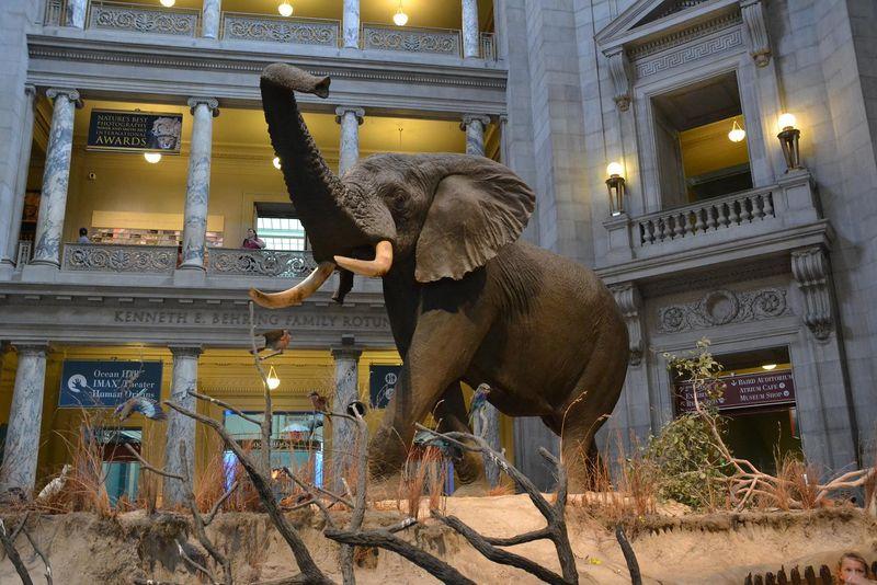 Ancient elephant