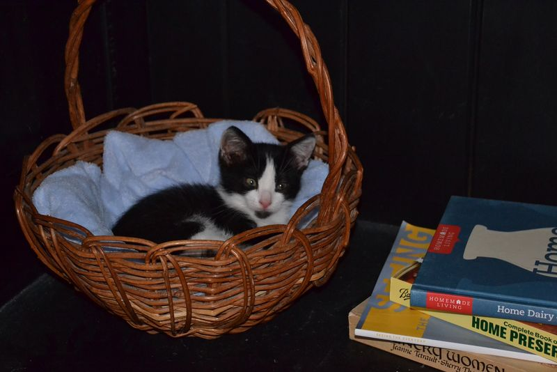 Snoozing in a basket